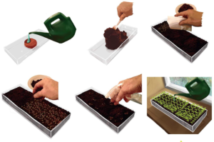 Grow-Wheatgrass-Kit
