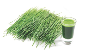 Wheatgrass-and-weight-loss