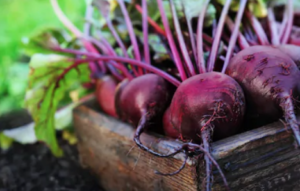 All-About-Beetroot-Nutrition-Facts