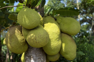All-About-Jackfruit