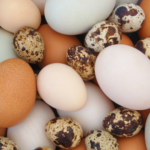 Egg White Allergy And Chicken Egg Alternatives