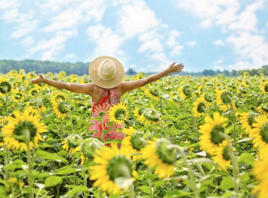 Happiness-In-Sunflower-Field