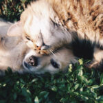 Cats And Love: What We Can Learn From Them